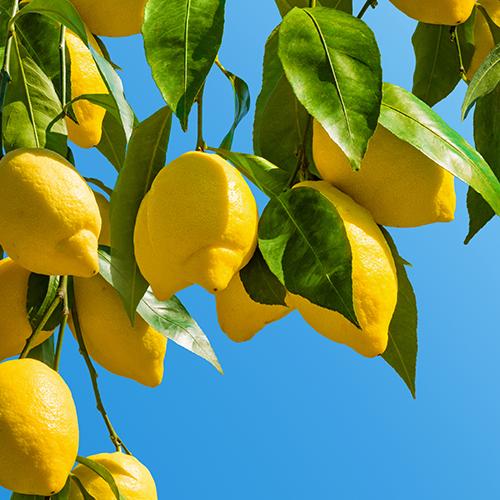 レモン果皮油オーガニック